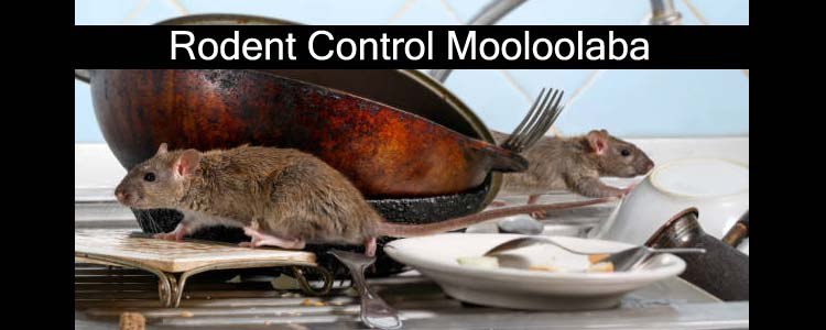 Rodent Control Mooloolaba